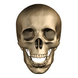 Human skull isolated on white background. Royalty Free Stock Images