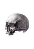 Human skull isolated on white background Royalty Free Stock Photography
