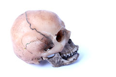 Human skull isolated on white background. Hum skull isolated on white background royalty free stock image