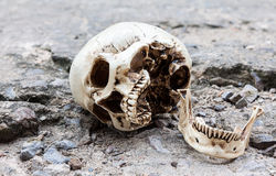 Human skull lean on old crack cement street Royalty Free Stock Image