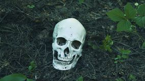 The human skull lies in the forest, and the flies crawl on it in the forest stock video footage