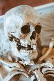 The human skull lies royalty free stock photo