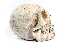 Human skull made of plaster Stock Photography