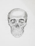 Human skull. medical illustration Stock Images