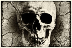 Human skull mixed with grunge texture Stock Photography