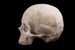 Human skull model. Isolated on black background Royalty Free Stock Photo