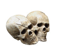 Human skull model isolated with clipping path. Royalty Free Stock Images