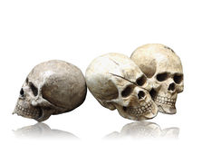 Human skull model isolated with clipping path. Royalty Free Stock Photography