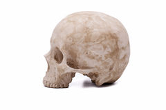 Human skull model Royalty Free Stock Photos