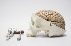 Human skull model and medical equpments Royalty Free Stock Photography