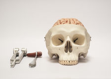 Human skull model and medical equpments Stock Photos