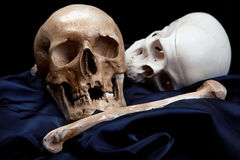 Human skull model.. Stock Photos