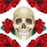 Human Skull Modern Style and roses. On a white background vector Stock Photos