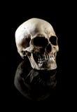 Human skull Royalty Free Stock Photo