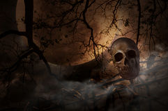 Human skull on old fence over dead tree, moon and cloudy sky, My Royalty Free Stock Image