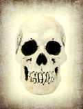 Human skull on old paper Royalty Free Stock Photo