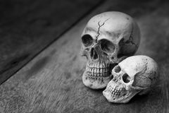 Human skull on old wood background. Royalty Free Stock Photo