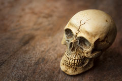 Human skull on old wood background. Stock Image