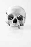 Human skull with only one tooth. In black and white Royalty Free Stock Photography