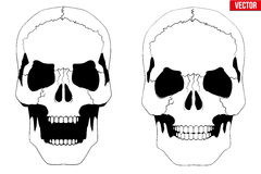 Human skull with open mouth in sketch style Royalty Free Stock Photography