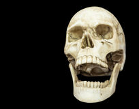 Human skull. Openning mouth human skull isolated on black background with copy space, clipping path Stock Photography