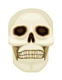 Human skull over white Royalty Free Stock Image