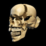 Human skull with parts exploded. Perspective view, on black background. Clipping path included Stock Photo
