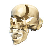 Human skull with parts exploded. Perspective view, on white background. Clipping path included Royalty Free Stock Photography