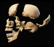 Human skull with parts exploded. Side view, on black background. Clipping path included Royalty Free Stock Photo