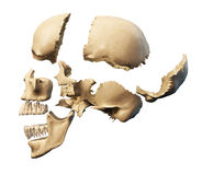 Human skull with parts exploded. Side view, on white background. Clipping path included Stock Photos