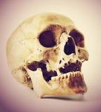 Human skull. Stock Images