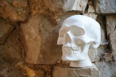 Human skull of plaster of white color royalty free stock photography