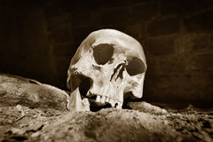 Human skull  in prisoner Royalty Free Stock Image