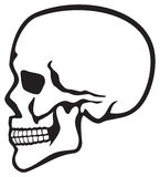Skull Royalty Free Stock Photos