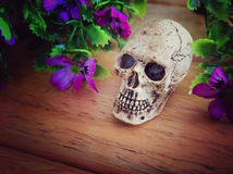 Human skull and purple flowers on wooden floor Stock Photo