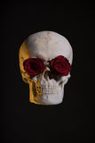 Human skull with red roses in eye sockets Royalty Free Stock Photos
