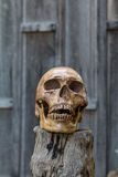 Human skull rests on the old wood. Stock Photography