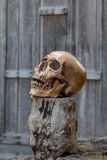 Human skull rests on the old wood. Stock Image