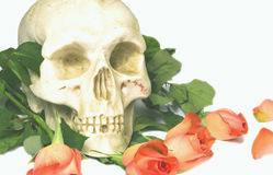 Human skull and roses stock images