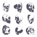 Human skull in rough sketch. Man head anatomy hand-drawn vector Royalty Free Stock Photo