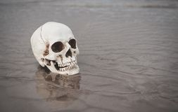 Human skull on the sand. Halloween background stock photos