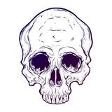 Human skull hand drawn in tattoo style. Human skull scary art hand drawn in line style. Isolated vector illustration. Can be tattoo, bag print, t-shirt print Royalty Free Stock Images