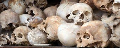 Human Skull Series 01 stock images