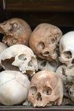 Human Skull Series 02. Human Skull image capture on Cambodia royalty free stock image