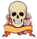 Human skull Stock Image