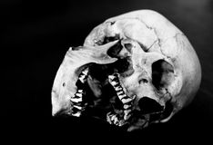 Human skull on side missing teeth with mouth open. Fiberglass human skull on side missing teeth on a black background Stock Photo