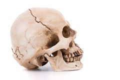 Human skull Stock Photos