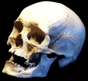 human skull, side view Royalty Free Stock Photography