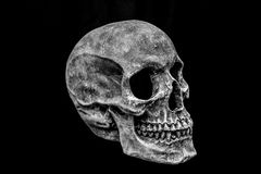 Human Skull side view Royalty Free Stock Images