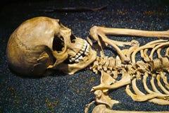 Human Skull and Skeleton Bones. Detail shot of a human skull and the top of it's skeleton royalty free stock photography
